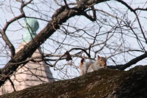 Esquilo Nova Iorque