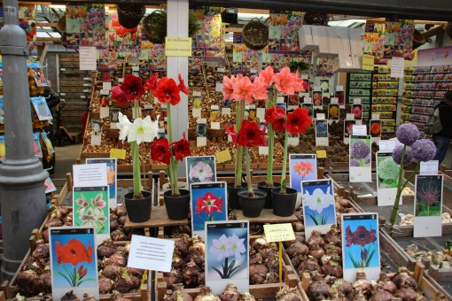 O Bloemenmarkt e suas flores