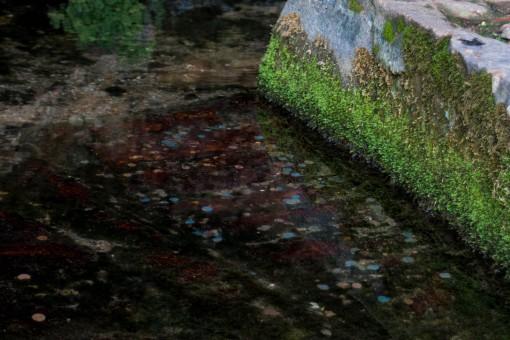 Sangue na fonte