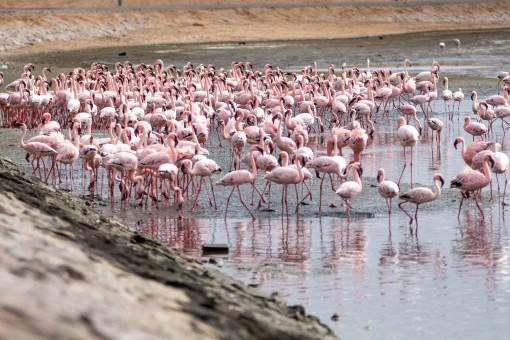 Nunca tinha visto tantos flamingos juntos.