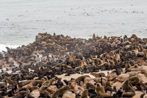 Quantos lobos marinhos você consegue contar aqui?