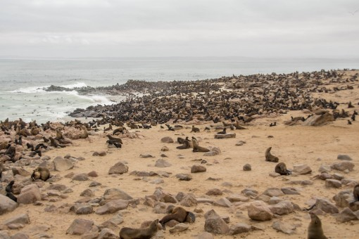 Essa é apenas uma pequena quantidade de lobos marinhos que vivem em Cape Cross.