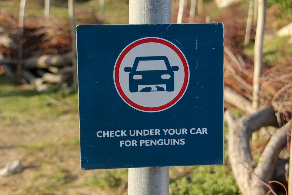 Placa informando que pode haver pinguins embaixo do carro.
