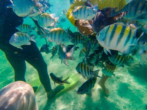 Dezenas de peixinhos se aproximando do guia que os alimenta sem que os turistas percebam