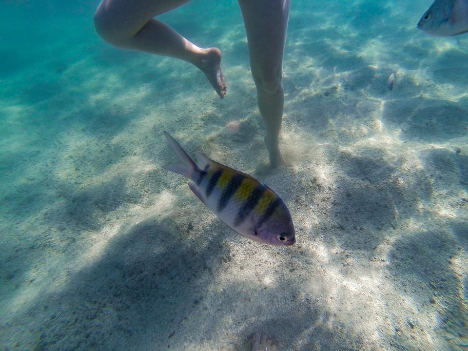 Eu ficando na ponta do pé devido a maré mais alta nas galés de Maragogi com um peixinho listrado de amarelo e cinza nadando a frente.
