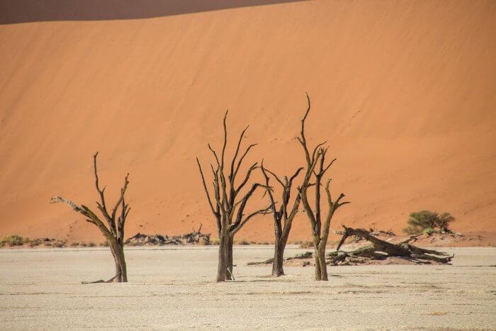 Deserto da Namíbia - cemitério de acácias Deadvlei