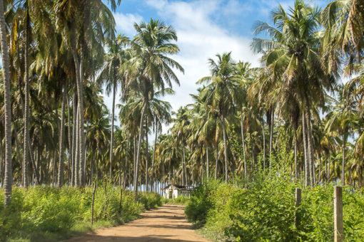 Praias de Alagoas - caminho até a Praia da Laje