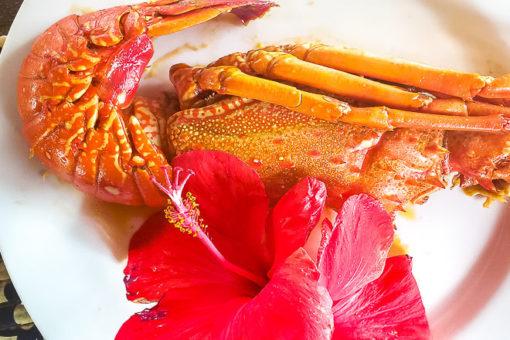 Praias de Alagoas - lagosta da Companhia da Lagosta