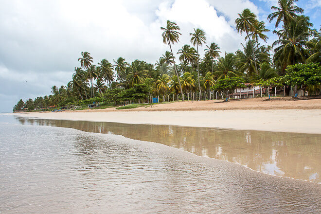 coqueiros na praia do Marceneiro