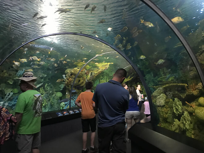 Aquário do Sea World onde você encontra diversos peixes