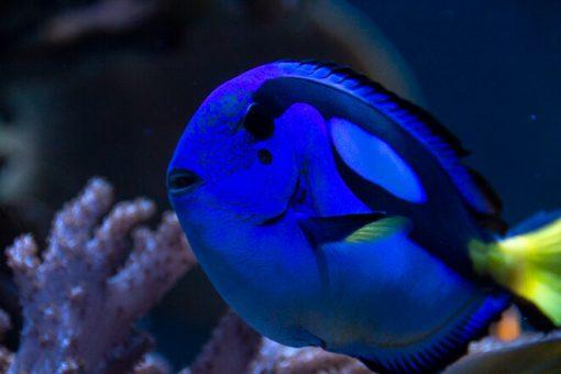 aquário marinho catavento cultural e educacional sp