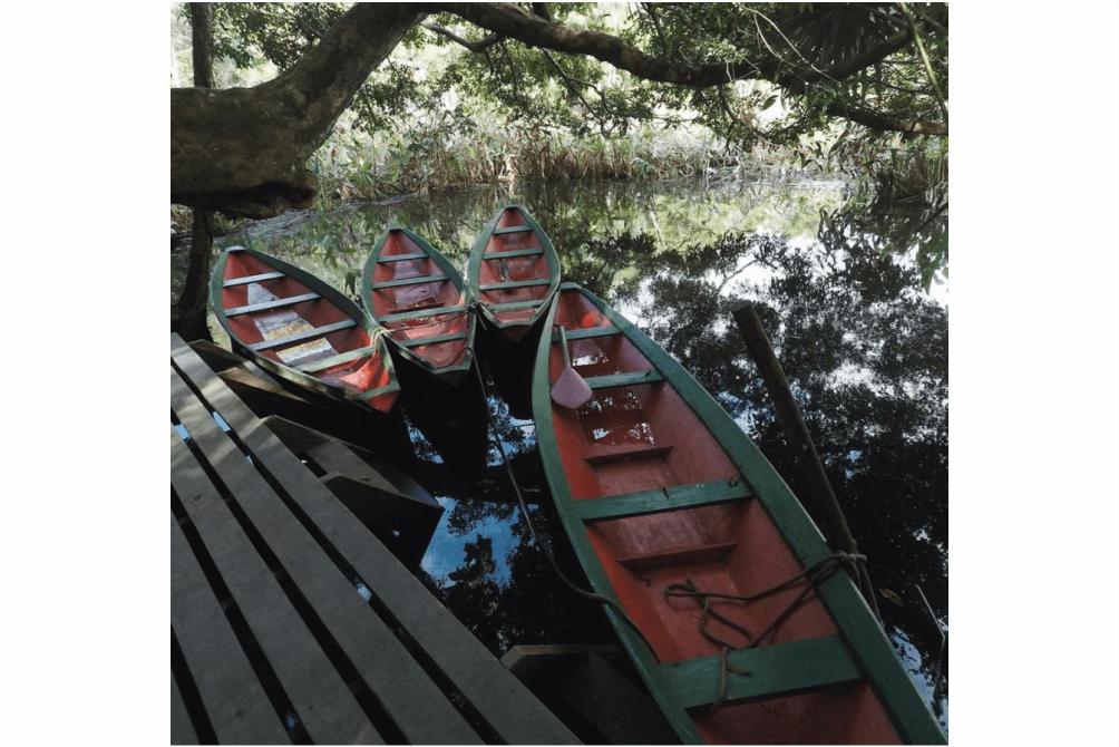 O que fazer em macapá - bioparque da amazônia